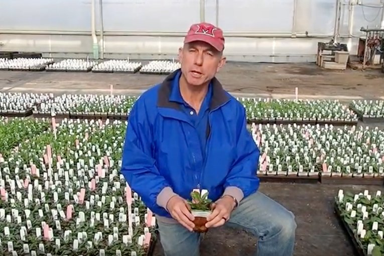 Bill Boostra, president of Bluestone Perennials
