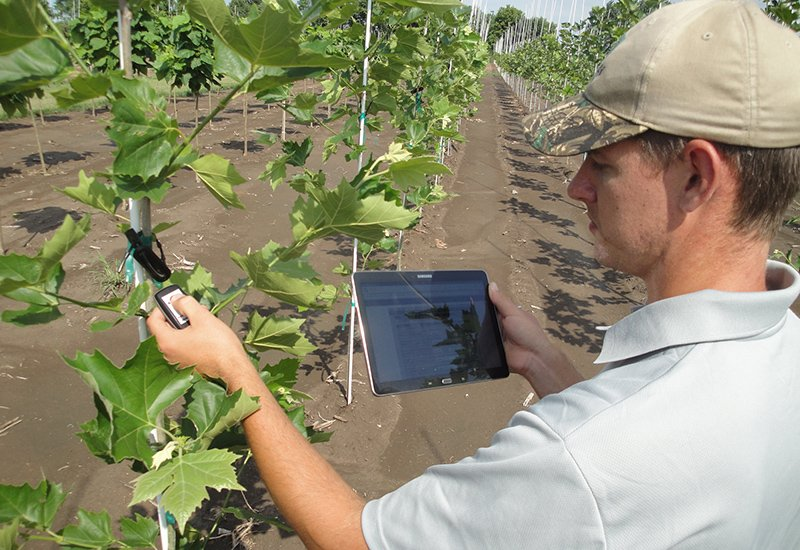 Scanning RFID tags at Leaves Inspired Tree Nursery