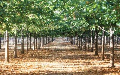 Walsh Tree Farm, Inside Scoop