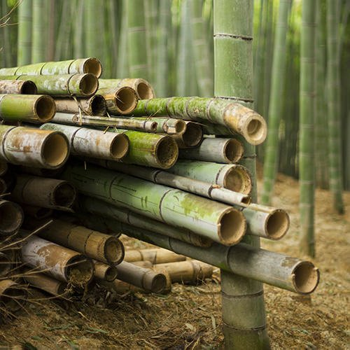 rfid solutions for bamboo growers harvesting bamboo